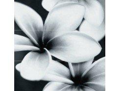 Pret-a-porter Black Flower Composition Панно (3шт)